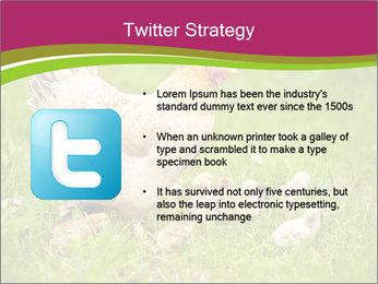 Mother chicken PowerPoint Template - Slide 9
