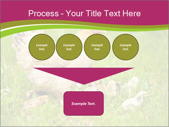 Mother chicken PowerPoint Template - Slide 93