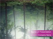 Forest with fog PowerPoint Templates