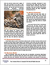 0000091622 Word Template - Page 4