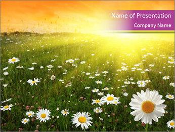 Flower field PowerPoint Template - Slide 1
