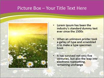 Flower field PowerPoint Template - Slide 13