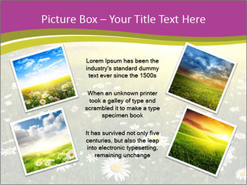 Flower field PowerPoint Template - Slide 24