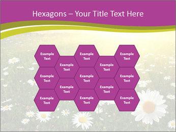 Flower field PowerPoint Template - Slide 44