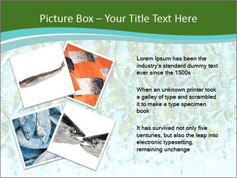 The fish PowerPoint Template - Slide 23