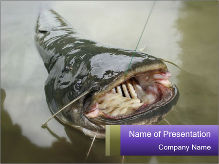 Catfish PowerPoint Template