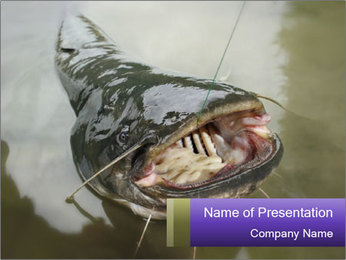 Catfish PowerPoint Template - Slide 1