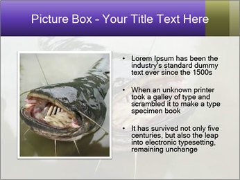 Catfish PowerPoint Template - Slide 13