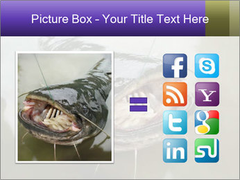 Catfish PowerPoint Template - Slide 21
