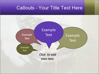 Catfish PowerPoint Template - Slide 73