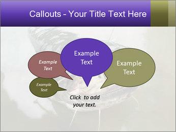 Catfish PowerPoint Template - Slide 73