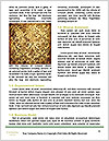 0000091660 Word Template - Page 4