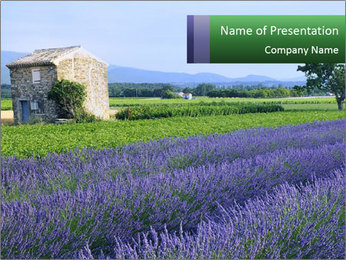 Nice lavender PowerPoint Template