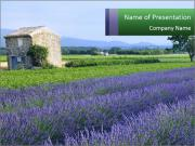 Nice lavender PowerPoint Templates