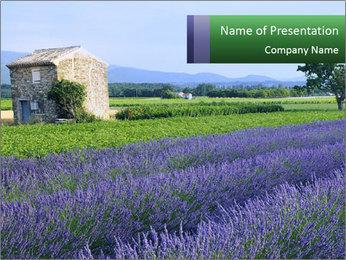 Nice lavender PowerPoint Template - Slide 1