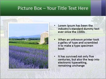 Nice lavender PowerPoint Template - Slide 13
