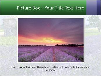 Nice lavender PowerPoint Template - Slide 16
