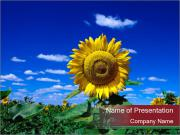 Sunflowers PowerPoint Templates
