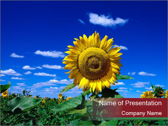 Sunflowers PowerPoint Template - Slide 1