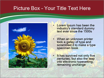 Sunflowers PowerPoint Template - Slide 13