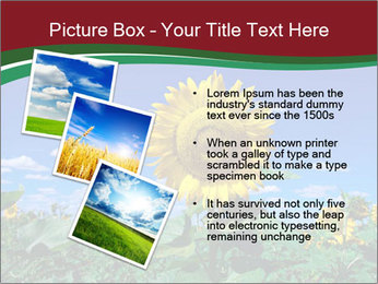 Sunflowers PowerPoint Template - Slide 17