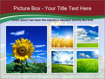 Sunflowers PowerPoint Template - Slide 19