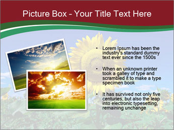 Sunflowers PowerPoint Template - Slide 20