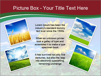 Sunflowers PowerPoint Template - Slide 24