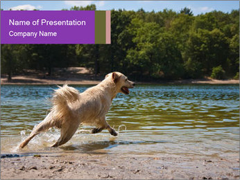 Golden Retriever PowerPoint Template