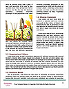 0000091705 Word Templates - Page 4