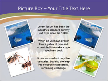 Piranha PowerPoint Template - Slide 24