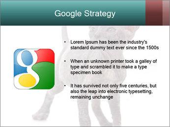 Cat PowerPoint Template - Slide 10