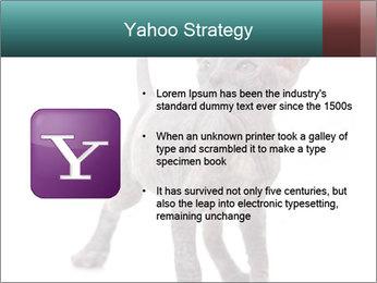 Cat PowerPoint Template - Slide 11