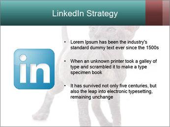 Cat PowerPoint Template - Slide 12
