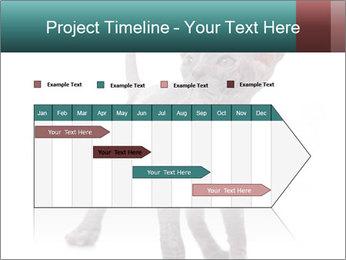 Cat PowerPoint Template - Slide 25