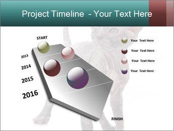 Cat PowerPoint Template - Slide 26