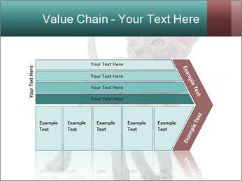 Cat PowerPoint Template - Slide 27