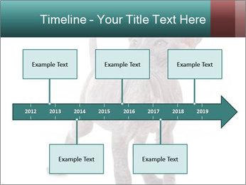 Cat PowerPoint Template - Slide 28
