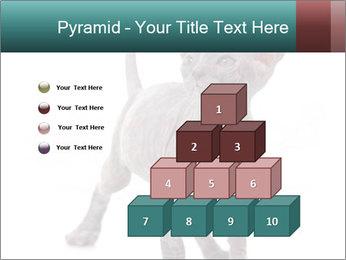 Cat PowerPoint Template - Slide 31