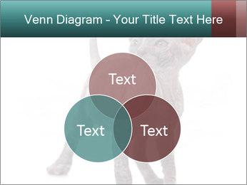 Cat PowerPoint Template - Slide 33