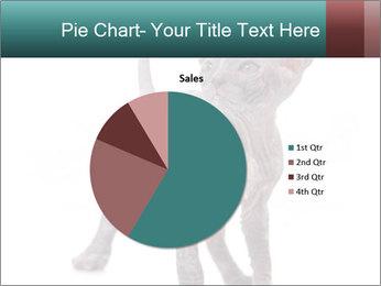 Cat PowerPoint Template - Slide 36