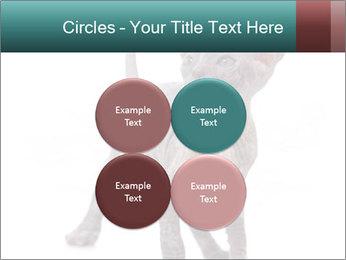 Cat PowerPoint Template - Slide 38