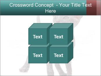 Cat PowerPoint Template - Slide 39