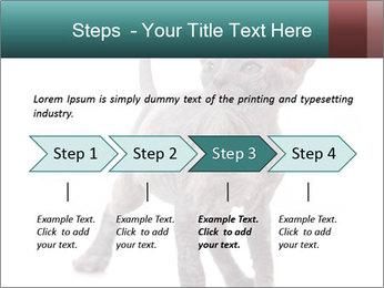 Cat PowerPoint Template - Slide 4