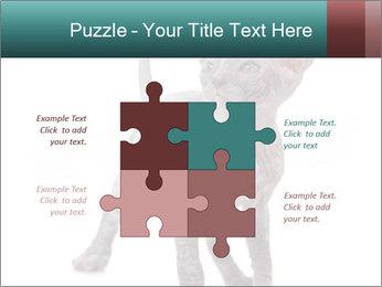 Cat PowerPoint Template - Slide 43
