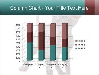 Cat PowerPoint Template - Slide 50