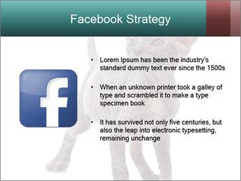 Cat PowerPoint Template - Slide 6