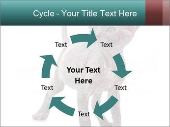 Cat PowerPoint Template - Slide 62