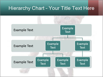 Cat PowerPoint Template - Slide 67