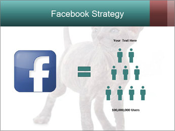 Cat PowerPoint Template - Slide 7